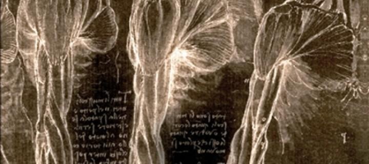 L'Anatomiste / Marilyne Fortin